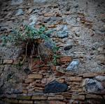 triumph over the stones