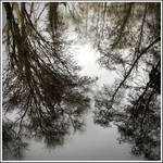 Reflection Of Trees2