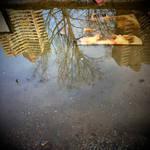 In Reflection by scheinbar