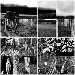 onedayinmydailylife - in des Waldes tiefsten Gruen