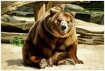 Berlin Zoo bear