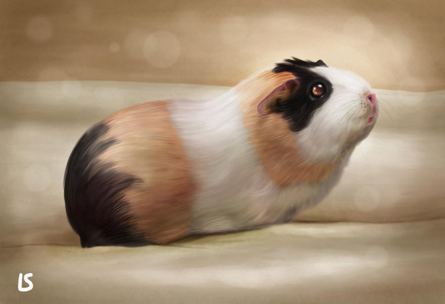 Sandra's piggy