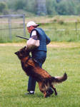 schutzhund - Tervuren