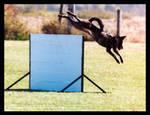Schutzhund jump