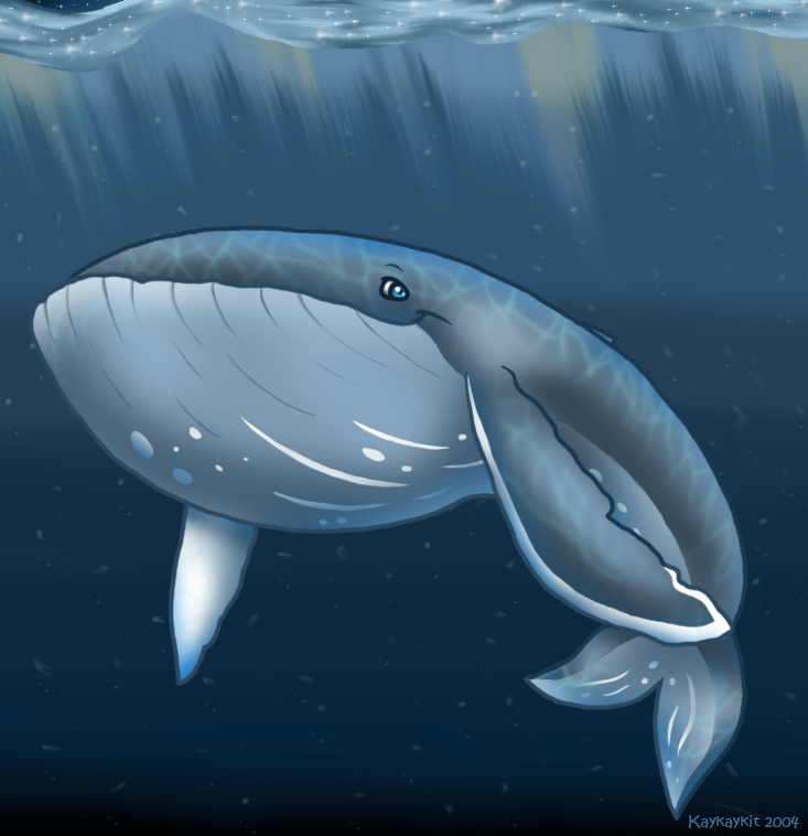 Humpback Whale by kaykaykit