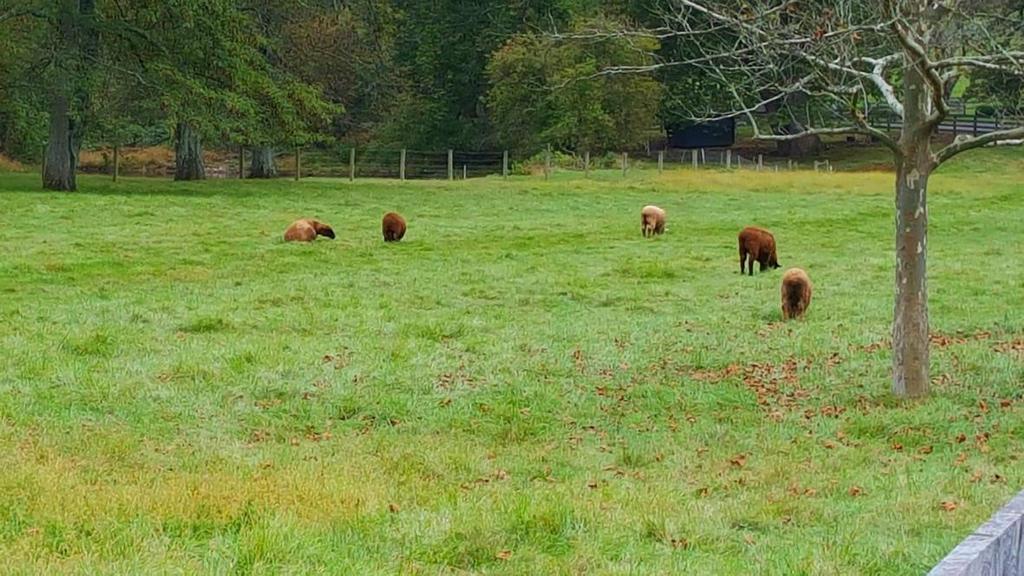 Herd of sheep by BenjaminCruz1082