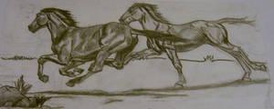 horses by unicornpusy