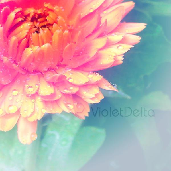 Blaze after rain by VioletDelta