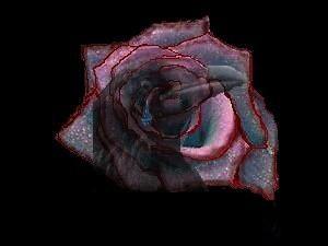 raven's tear by MoonlitShadow