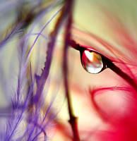 drop of colour by alexciel