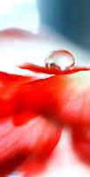 droplet by alexciel