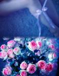 night flowers by alexciel