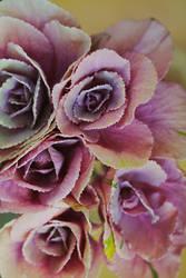 cabbage by alexciel
