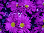 Mums the word. by thayssharumrn