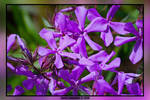 Deep Purple by thayssharumrn