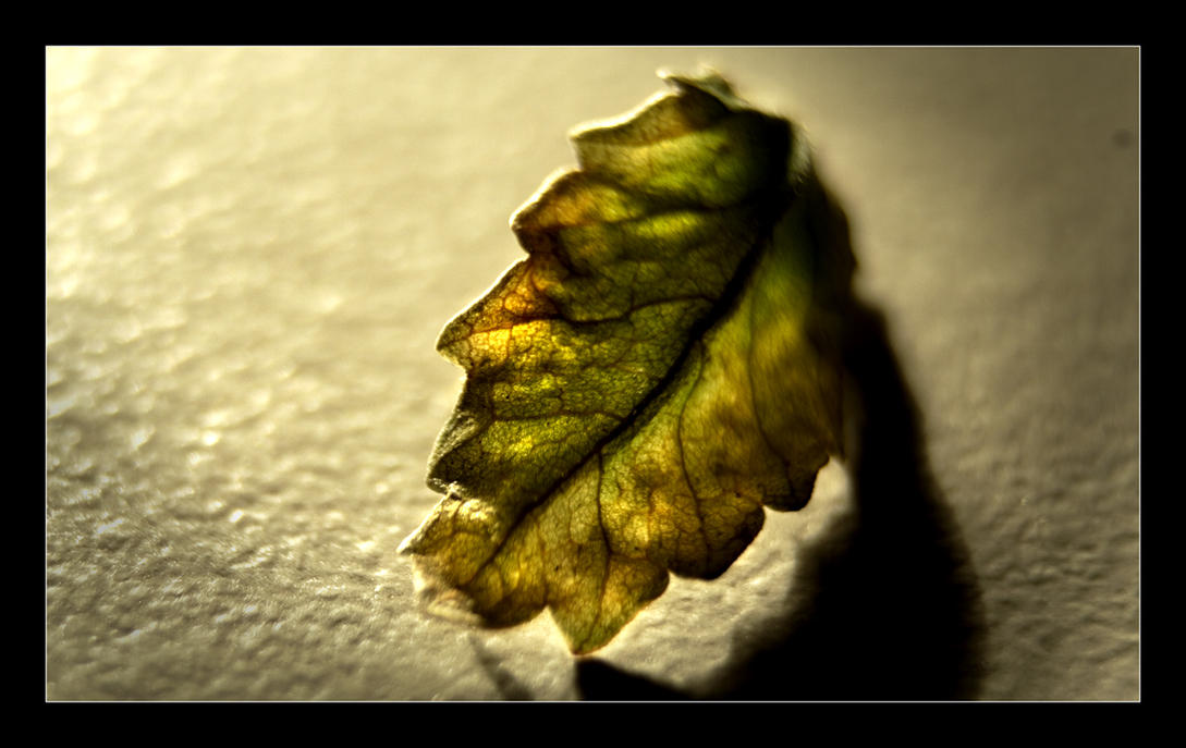 Macro Bonsai leaf by Batteryhq