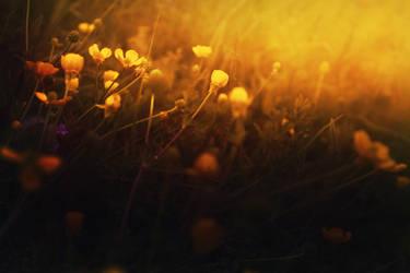 Flowers by Gvinevra38