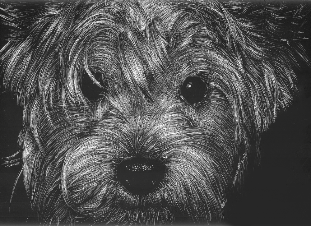 Bella: Scratchboard. by ame-ga-furu