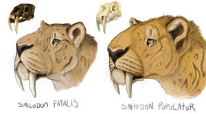 Smilodon head studies (OLD) by Minionwolf711