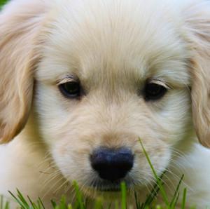 puppylovesanimals's Profile Picture