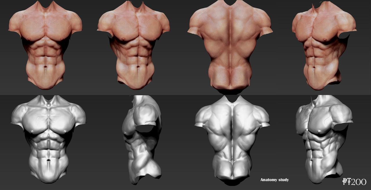 Anatomy Study by PT200