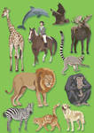 The Mammal book Illustrations