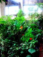 Small Garden Shot by KeMo0o