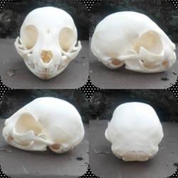 Kitten skull stock by Naturesbounty1012345