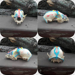 Painted Racoon Skull Stock 1.2 by Naturesbounty1012345