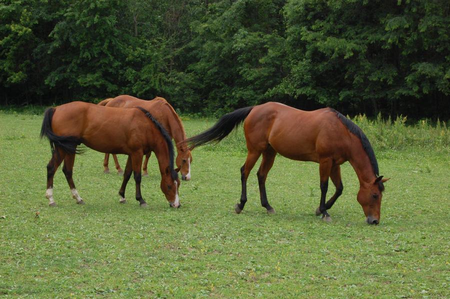Horses 2 by CrimsonNightStock