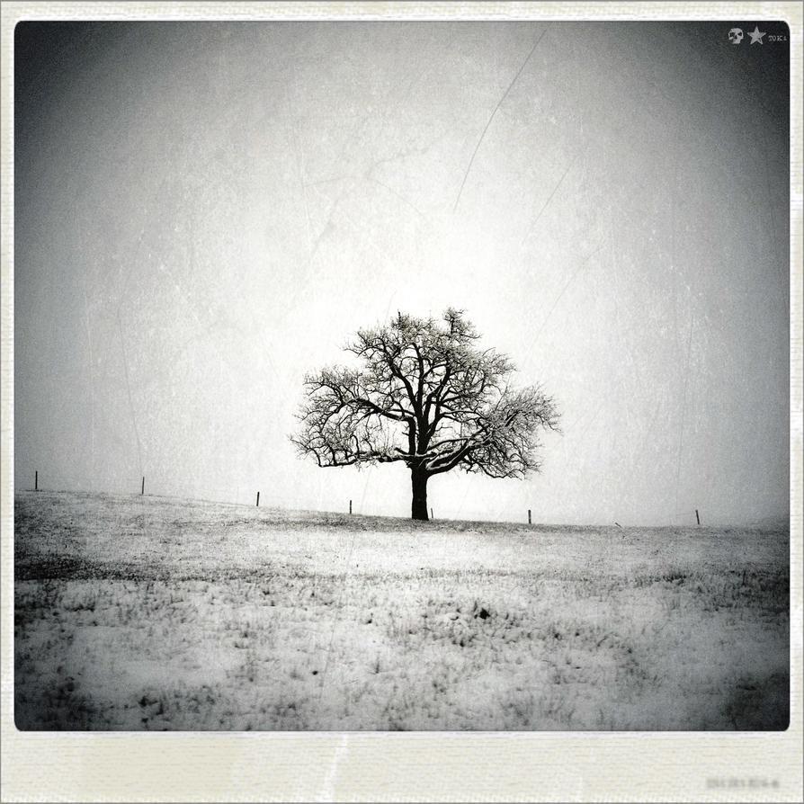 .12.04.08. by dasTOK