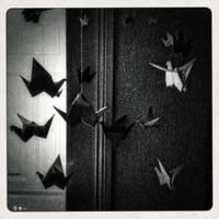 .kranich. by dasTOK