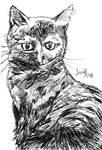 Holly Cat Portrait in Ink by ArtByJenX