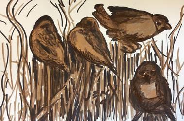 Tree Sparrows drawing in minimal colour. by ArtByJenX