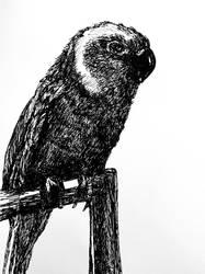 Commission - pet bird portrait by ArtByJenX
