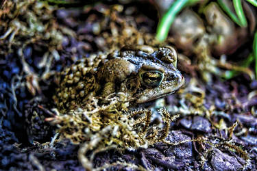 HDRI Toad by Soltis
