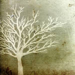 Alif Tree by Migrena