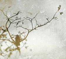 .de noiembrie by Migrena