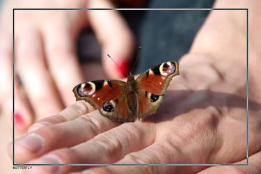 butterfly by velandaron