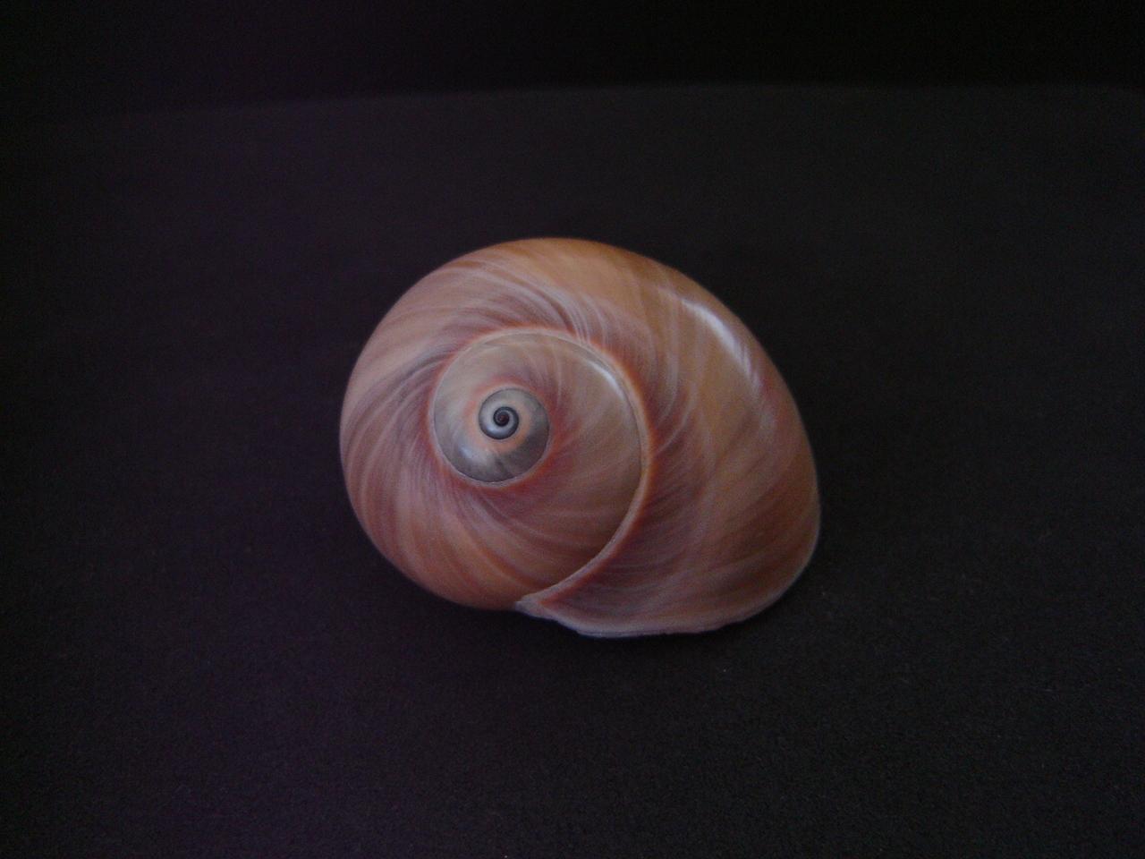 Shell 001