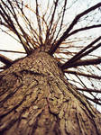 .rougher than tree-bark.