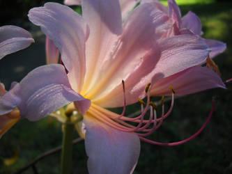 A Delicate Beauty