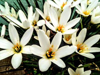 flowers from terrace garden  by kishorr