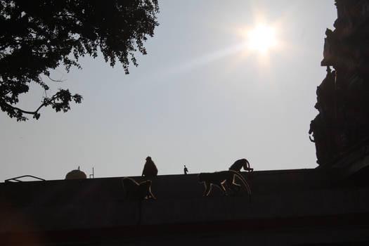 the parade of monkeys!
