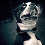 alien dog. by feverandmirrorrrs