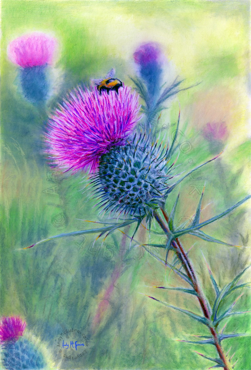 scottish thistle pastel painting by rustypencil on deviantart