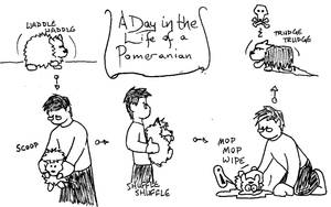 A day in the life: Pomeranian by Luprand