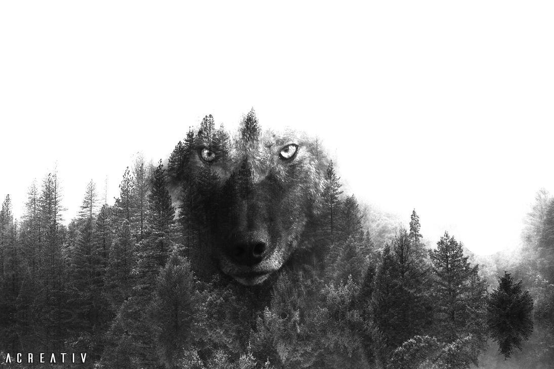 Wolf by Acreativ