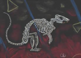 Rattus Norvegicus by mutantratz