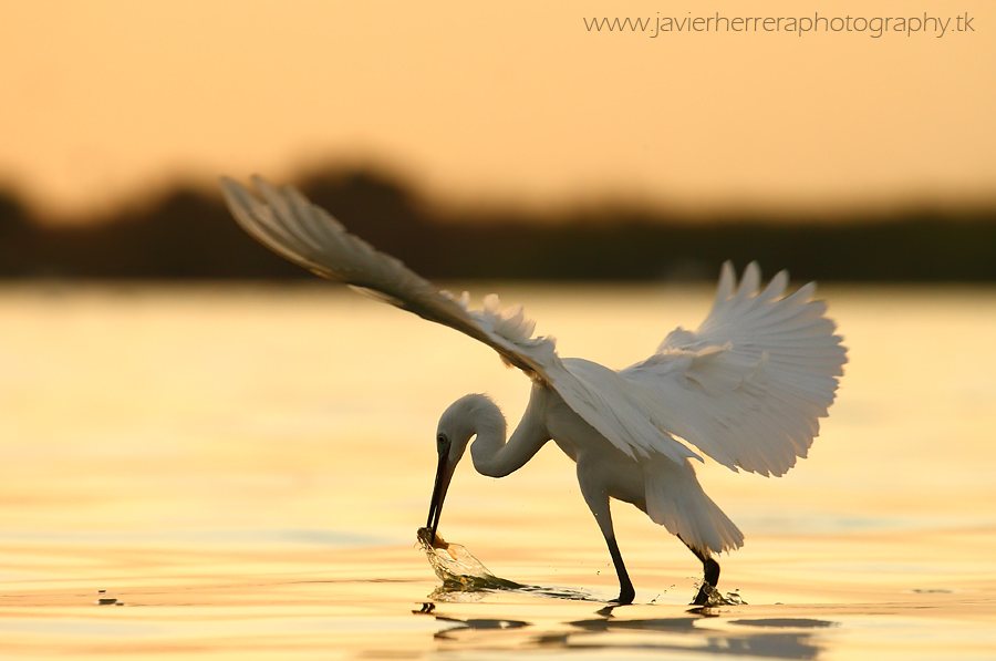 Amanecer de pesca by javierherrera86